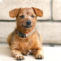 Adopt A Pet :: Cyrus - Coronado, CA
