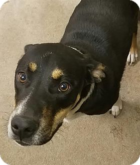 Beagle/Hound (Unknown Type) Mix Dog for adoption in Havelock, North Carolina - Brasi