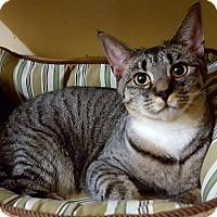 Adopt A Pet :: Kira - Salisbury, MA