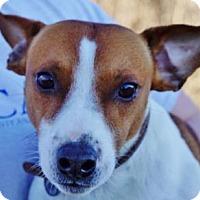 Adopt A Pet :: Truman - LaHarpe, KS