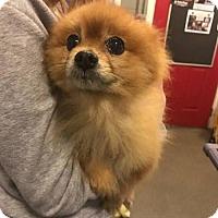 Adopt A Pet :: Pujo - Matawan, NJ