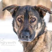 Adopt A Pet :: Baker - Reisterstown, MD
