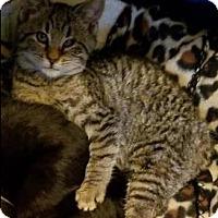 Adopt A Pet :: Carmel - Mebane, NC