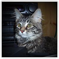 Adopt A Pet :: CLARICE - Medford, WI