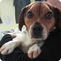 Adopt A Pet :: Cookie - Newburgh, IN