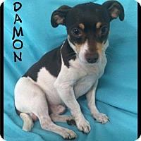 Adopt A Pet :: Damon - *** / 2017 - Maumelle, AR