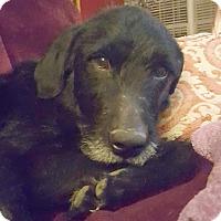 Adopt A Pet :: Harry - Cincinnati, OH