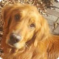 Adopt A Pet :: Bowie - Denver, CO