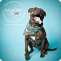 Adopt A Pet :: Phelps - Park Ridge, NJ