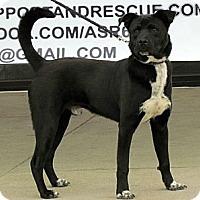 Adopt A Pet :: Ernie - Justin, TX