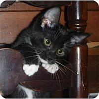 Adopt A Pet :: Pita - San Ramon, CA