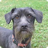 Adopt A Pet :: Jake - Mocksville, NC