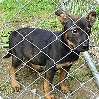 Adopt A Pet :: Drake - Jarrettsville, MD
