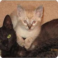 Adopt A Pet :: Baby Gracie - Modesto, CA