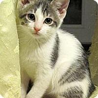 Adopt A Pet :: Elton John - Seminole, FL