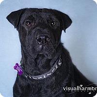 Adopt A Pet :: Jewel - Phoenix, AZ