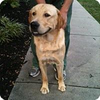 Adopt A Pet :: Levi - Foster, RI