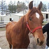 Adopt A Pet :: Windcharmer - Dewey, IL