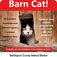 Adopt A Pet :: BARN CATS! OUTDOOR CATS! - Westampton, NJ
