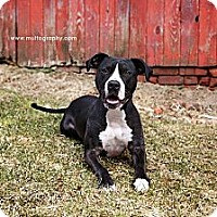 Adopt A Pet :: Mickey - Woodbridge, CT