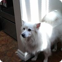 Adopt A Pet :: Sookie - Northumberland, ON