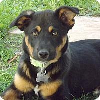 Adopt A Pet :: Ruthie - Phoenix, AZ