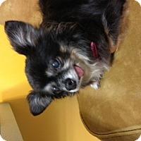 Adopt A Pet :: Nugget - S. Pasedena, FL
