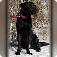 Adopt A Pet :: Barry - PENDING - Grafton, WI