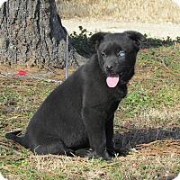 Adopt A Pet :: RIVER - Hartford, CT