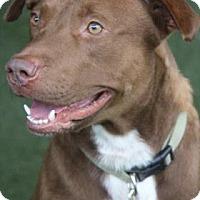 Adopt A Pet :: Cal - Lakeland, FL