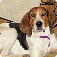 Adopt A Pet :: Venus - Cleveland, OH