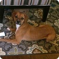 Adopt A Pet :: Sophia - Groton, MA