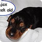 Adopt A Pet :: Penelope's Ajax