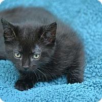 Adopt A Pet :: Sambo - Houston, TX