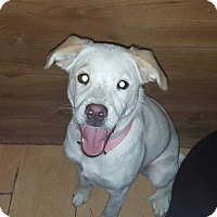 Adopt A Pet :: Abby - Berwick, PA