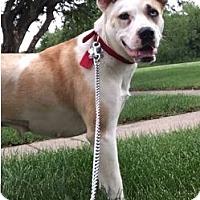 Adopt A Pet :: Elly - Hillside, IL