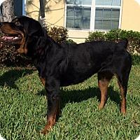 Adopt A Pet :: Emma - Seffner, FL