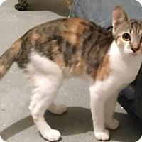 Adopt A Pet :: Sadie - Tampa, FL