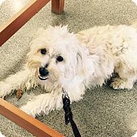Adopt A Pet :: Jaxon - Woodinville, WA