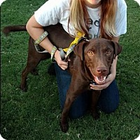 Adopt A Pet :: Ruger - San Tan Valley, AZ