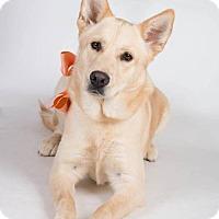 Adopt A Pet :: Skylar - Irving, TX