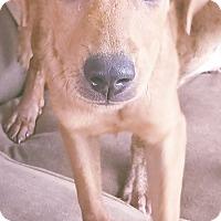 Adopt A Pet :: Karl - Phoenix, AZ