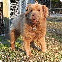 Adopt A Pet :: Teddy - Newport, NC