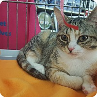 Adopt A Pet :: Bacall - Franklin, IN
