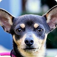 Adopt A Pet :: Dayanara - San Diego, CA