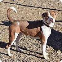 Adopt A Pet :: Airborne - Sierra Vista, AZ