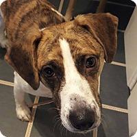 Adopt A Pet :: Daisy - Summerville, SC