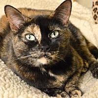 Adopt A Pet :: Vibeke - Queens, NY