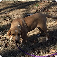 Adopt A Pet :: Cher - Hagerstown, MD