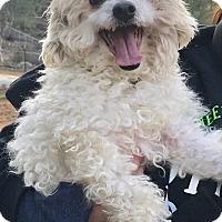Adopt A Pet :: TOBY - Studio City, CA